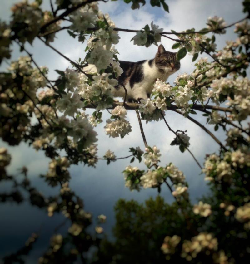 Rumi im Apfelbaum